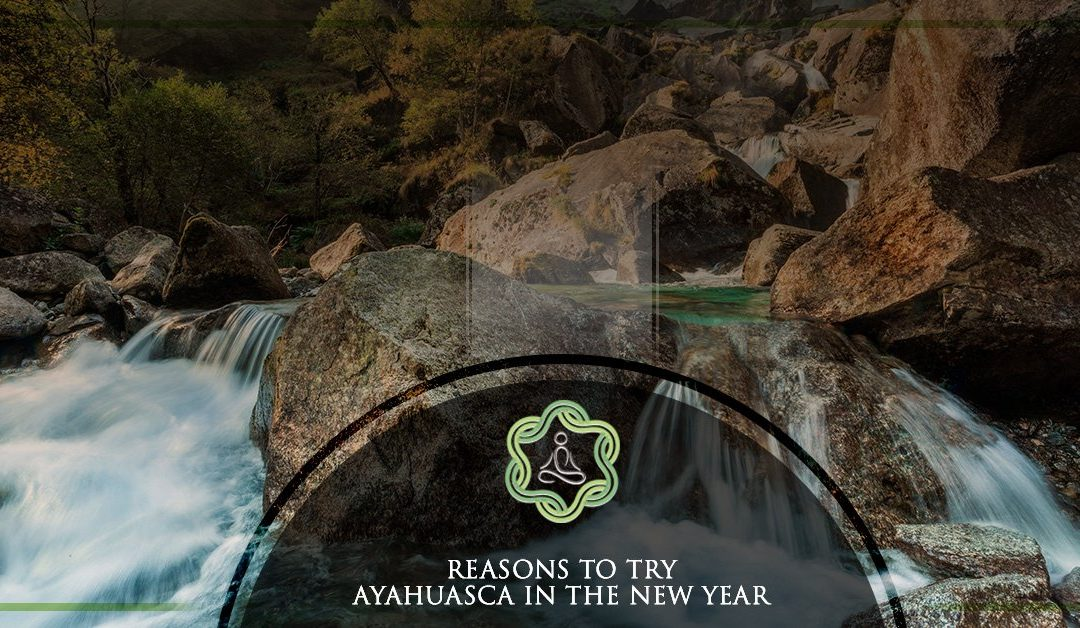Reasons To Start The New Year With Ayahuasca