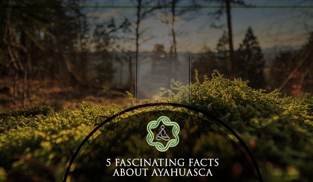 5 Fascinating Facts About Ayahuasca