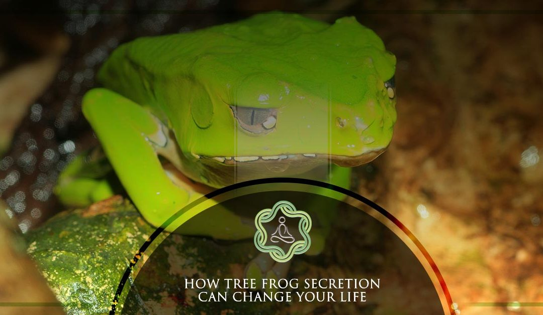 How Tree Frog Secretion Can Change Your Life