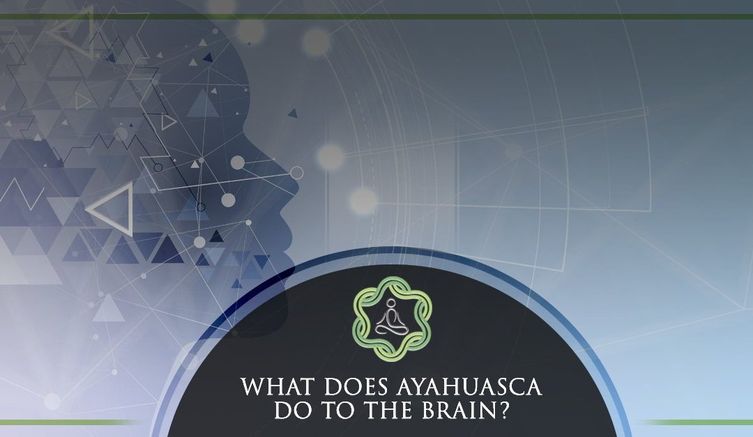 What Does Ayahuasca Do To The Brain?