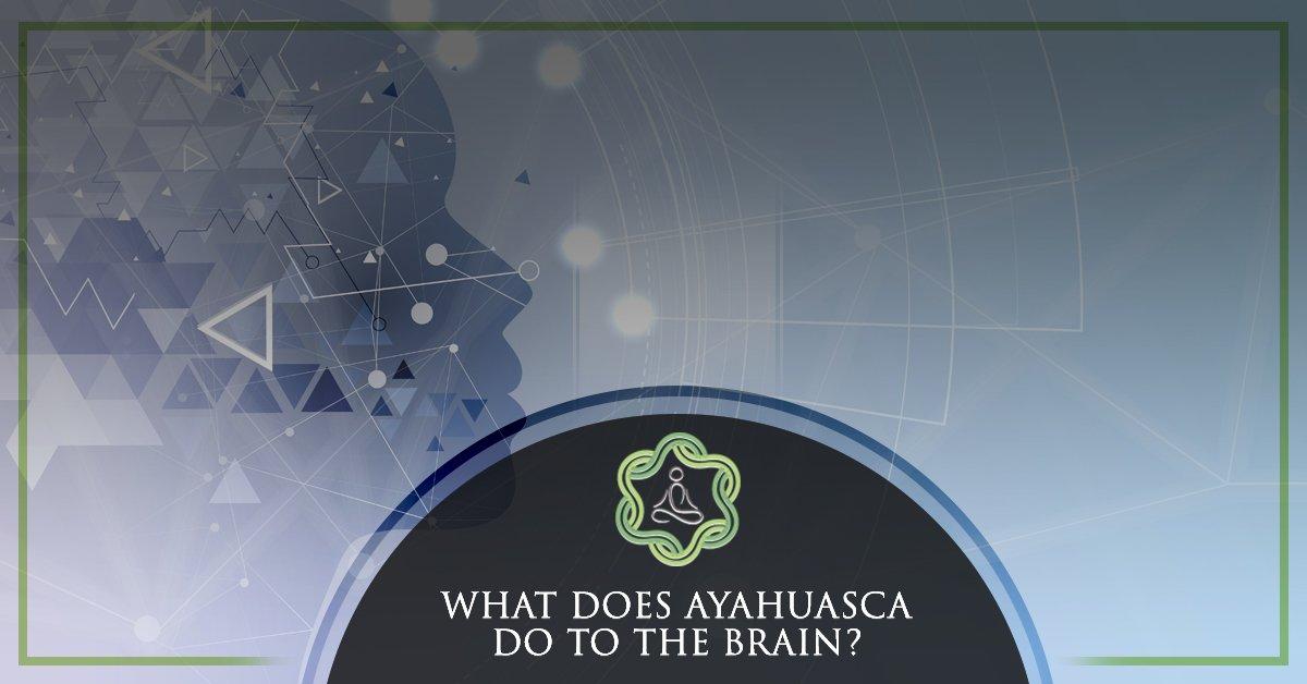 Ayahuasca Retreats Orlando: Your Brain On Ayahuasca